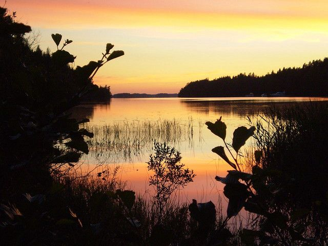 Nature's gold, Punkaharju, Finland