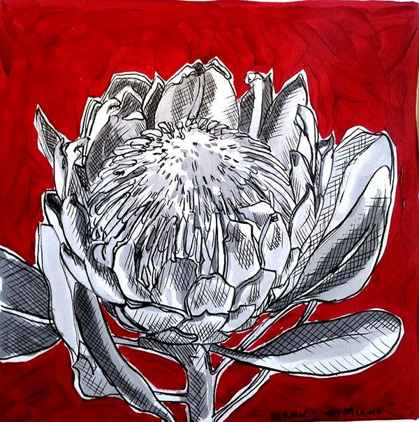 Hermien Van Der Merwe;  Title: Fynbos:  Table Mountain Fynbos 3 Medium: Pen-and-Ink drawing on paper with oil paint background Size: 200 x 200mm