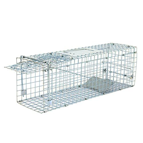 "ZENY Live Animal Cage Trap 24""/32"" Steel Cage Catch Release Humane Rodent Cage for Rabbits, Stray Cat, Squirrel, Raccoon, Mole, Gopher, Chicken, Opossum, Skunk & Chipmunks   http://huntinggearsuperstore.com/product/zeny-live-animal-cage-trap-2432-steel-cage-catch-release-humane-rodent-cage-for-rabbits-stray-cat-squirrel-raccoon-mole-gopher-chicken-opossum-skunk-chipmunks/"