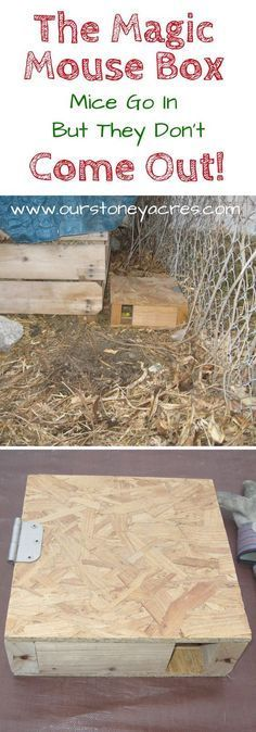 The Magical #Mouse Box is a simple solution we have been using for years to help #control the mice population around our #chicken #coop and #compost bins. Build a few of these and your mice problem will magically disappear!