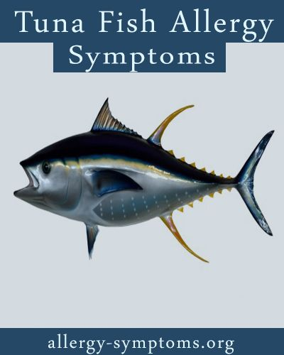 Most Americans love seafood but reports say that about 7 million Americans are affected by fish allergy, which include tuna fish, shellfish, salmon and cod. Studies further states that most people develop seafood allergy in adulthood http://allergy-symptoms.org/tuna-fish-allergy-symptoms/