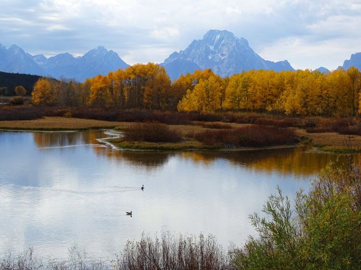 Fall Descends in the Grand Tetons~ See: http://cindyknoke.com/2015/09/28/the-elk-are-bugling/