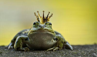 Der Frischkönig wartet auch bei den Schnitzeljagd Aufgaben.....Quaaaak! Foto: Gabriela Neumeier  / pixelio.de