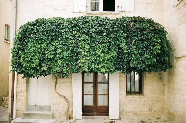: The Doors, Green Wall, Trees Canopies, Green Gardens, Front Doors, Ivy, Southern France, Entrance, Provence France