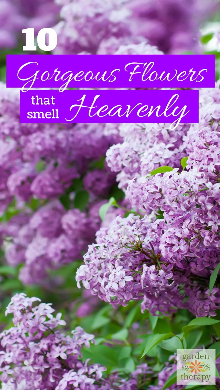 Best 25 all flowers ideas on pinterest art of flowers paper 10 gorgeous fragrant flowers for your garden that smell heavenly dhlflorist Image collections