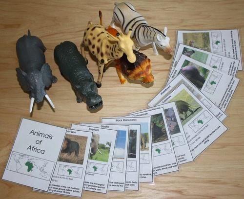 Montessori Zoo Unit