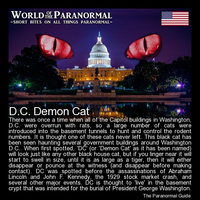 D c demon cat capitol buildings washington d c us for Paranormal activities in the world