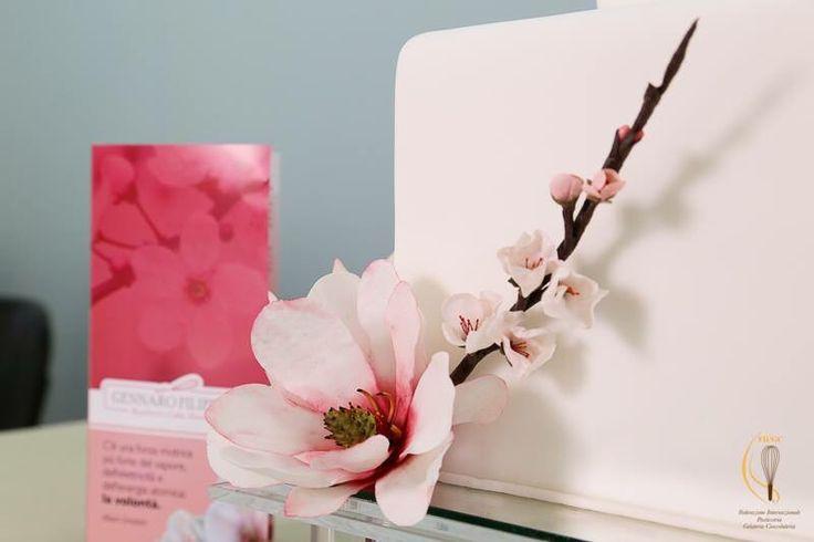 Magnolia e fiore di ciliegio