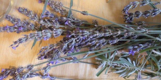 Lavender Oil, Some Uses