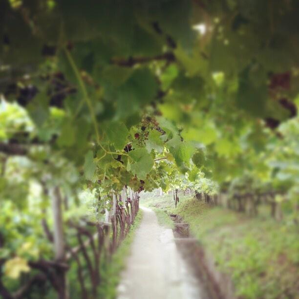 Wine @Algunder Waalweg