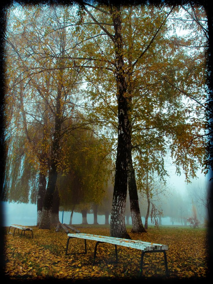 Sometimes the fog sings. -