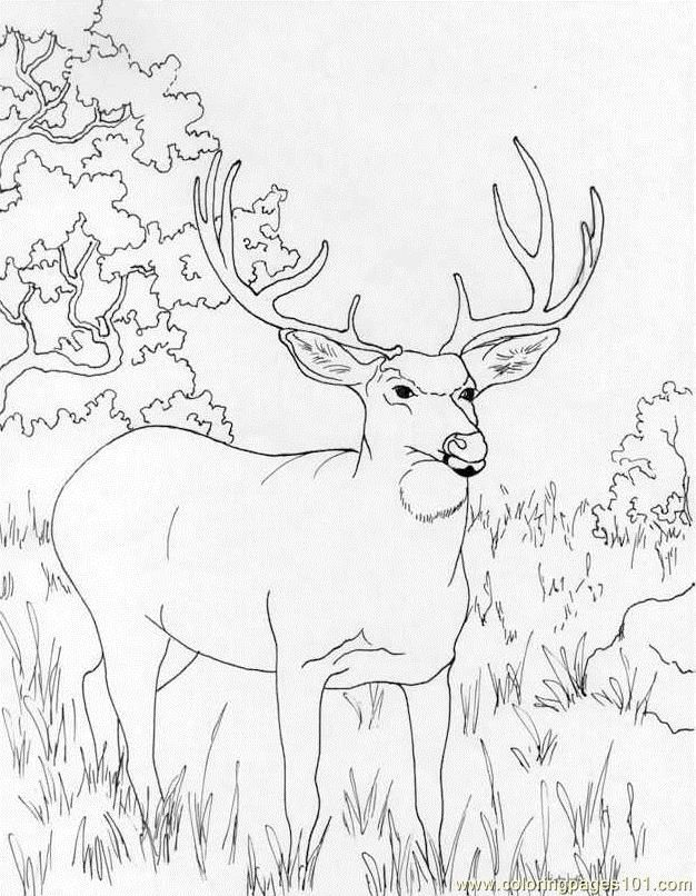 coloring pages muledeer mammals deer free printable coloring - Hunting Coloring Pages