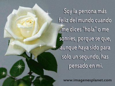 rosas-blancas-con-frases-de-amor