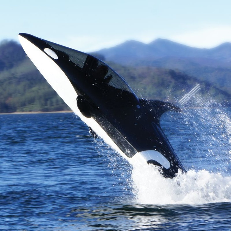 Rule the Ocean with a Killer Whale Submarine: Killers Whales, Whales Personalized, Killer Whales, Orcas, The Killers, Toys, Hammacher Schlemmer, Personalized Submarines, Whales Submarines