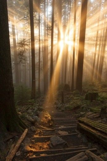 News - B.C.'s prized all-season attraction Grouse Mountain for sale - The…