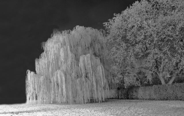 The Ice Garden. Night Circus