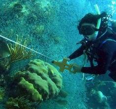 UNAM Puerto Morelos Reef Systems