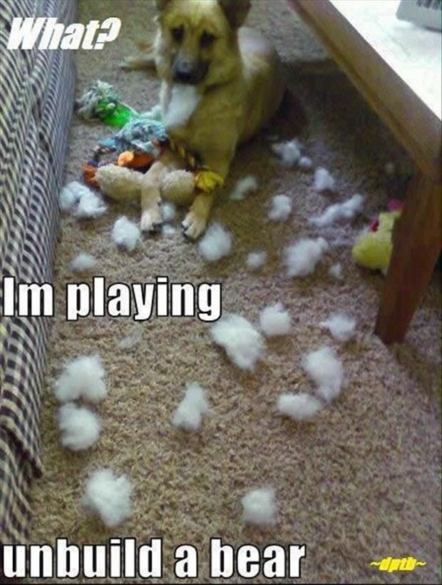 Funny Dog Pictures with Captions | funny dog Scruffy's favorite game!