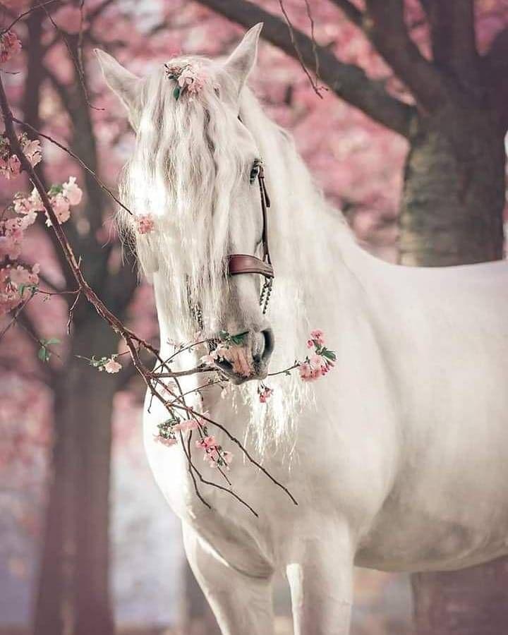 White Horse In Spring Horses Cute Horses Beautiful Horses