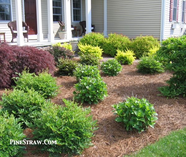 Pine Needles For Mulch Curb Appeal Pinterest