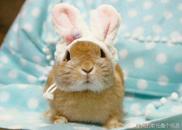 """It's looking like, """"I'm confused, I thought I already had ears."""""""