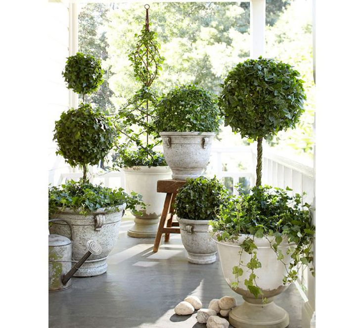 17 Best Images About Cloches Urns Amp Topiaries On
