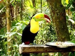 Los ranfástidos (Ramphastidae), conocidos vulgarmente como tucanes, diotedé, o diostedé, son una familia de aves piciformes que se caracterizan por poseer un pico muy desarrollado y de vivos colores.