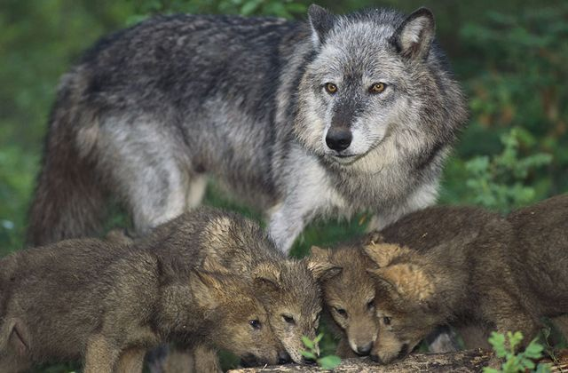 Bűbájos fotók: így védik a kicsinyeiket az állatok http://www.nlcafe.hu/csalad/20150706/allat-szulo-vedelem-fotok/