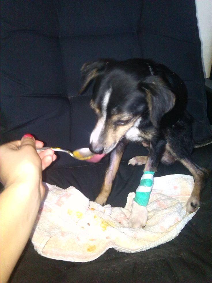 Alvin wyzdrowiał :) #psy #dogs #adopt #adopcje #schronisko #shelter