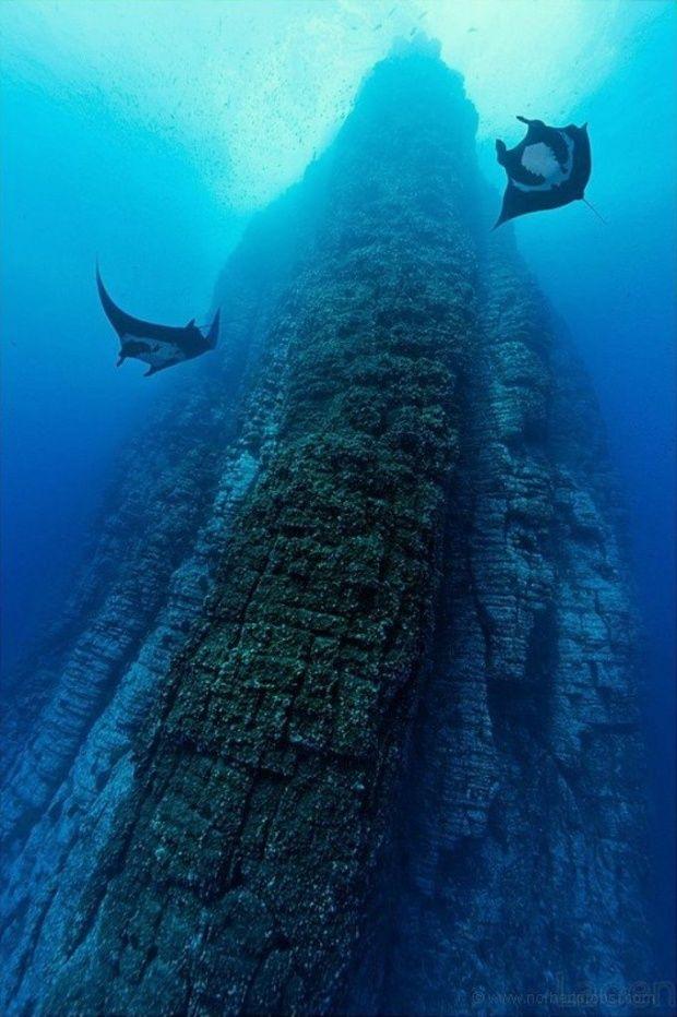 Amazing nature photosManta Ray, Beautiful, Socorro Islands, Sea, Roca Partida, Places, Amazing Nature, Ocean Life, Deep Blue