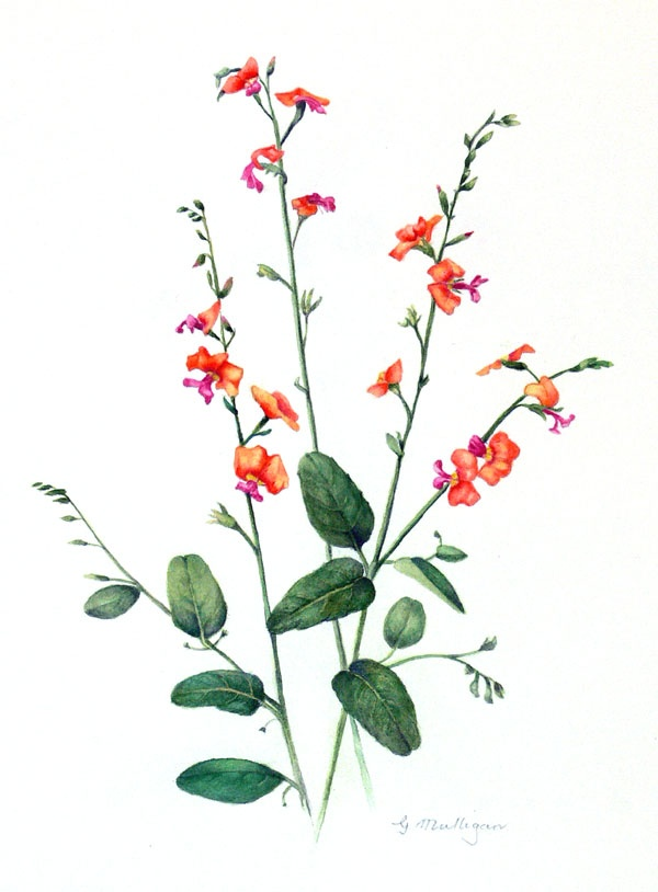 2111 best images about botanical illustrations on pinterest