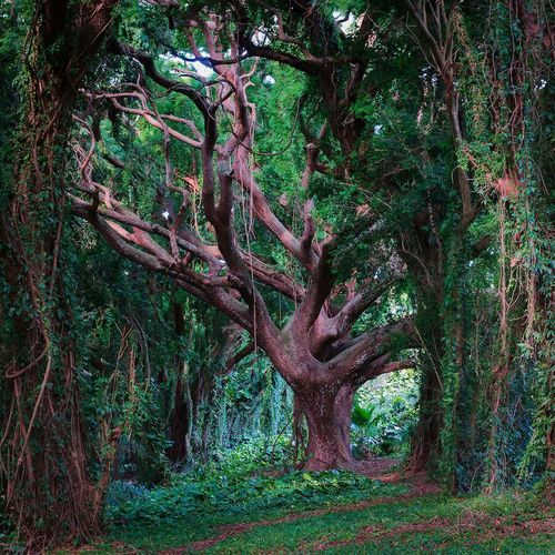 Tree of Life, Maui, Hawaii