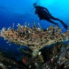 Scuba dive.: Diving Licen, Beaches, Check, Underwater Navig, Boats, Scubas Diving, Finding, Bit Rusty, The Roller Coasters