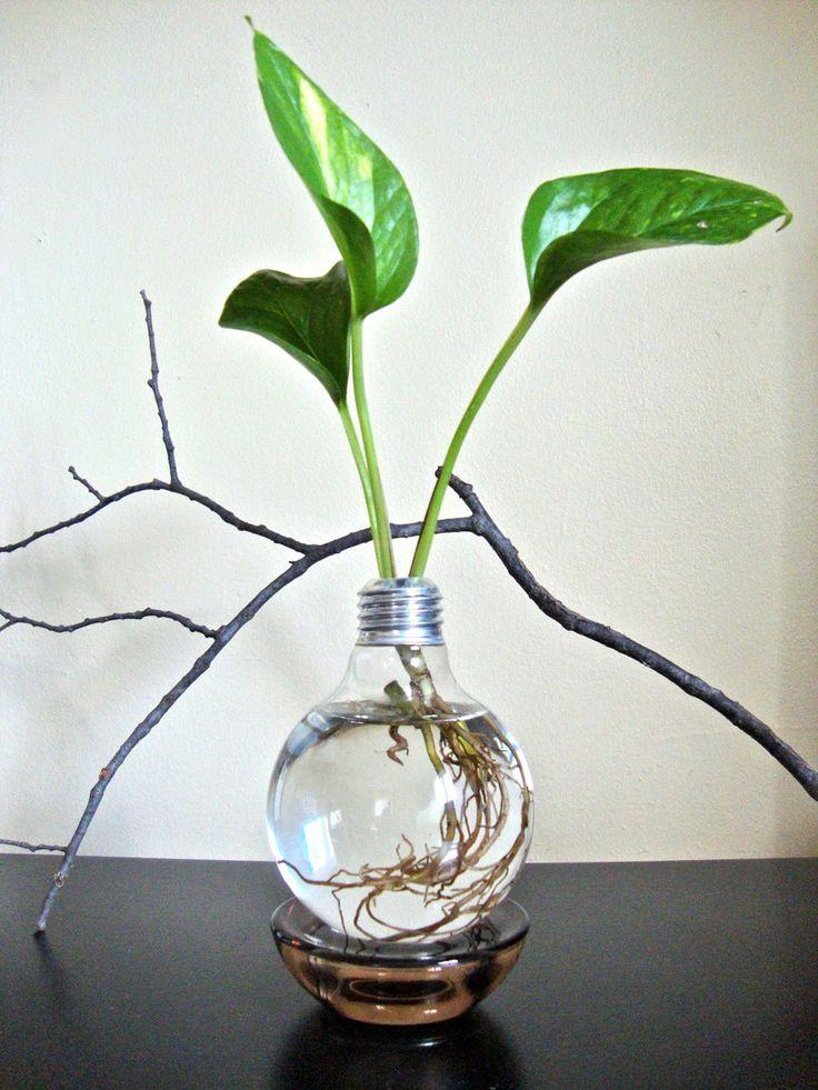 The Best Houseplant For Decorating Light Bulb Vase 640 x 480