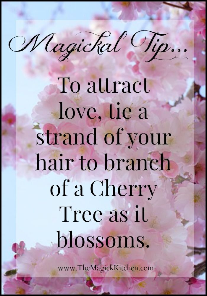 Magical Tips from The Magick Kitchen: To attract love, tie a strand of your hair to branch of a Cherry Tree as it blossoms.