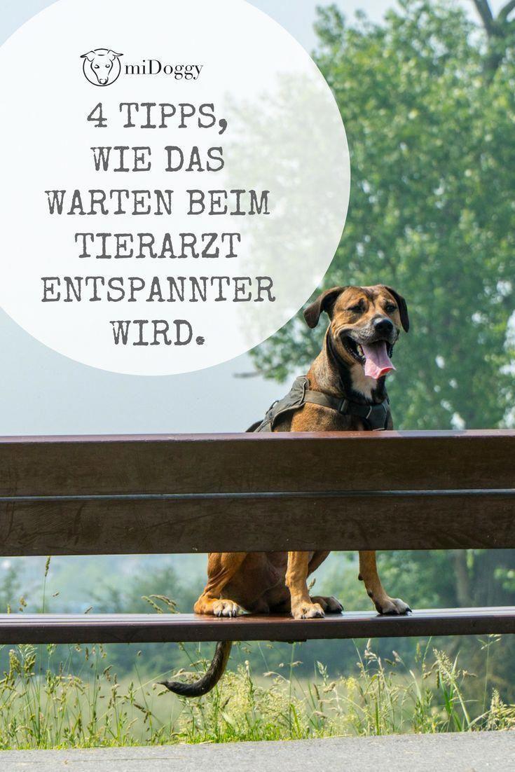 Hund Ideen Hunde Tipps Tricks Ideen Liebe Welpen Bilder Hundeerziehung Dogtricks Tierarzt Welpen Hundchen Training