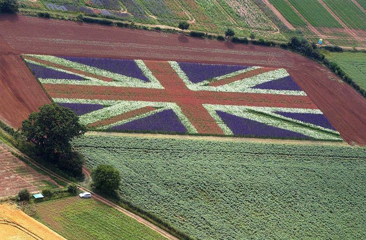 A clever farmer, with his field of delphinium ...