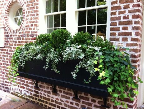 Simple boxwood  ivies look chic in a black window box - Charleston, SC