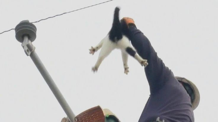 A black and white pet cat named Fat Boy has been brought to safety from an electricity pole in Fresno, California, after being stranded for around eight days.