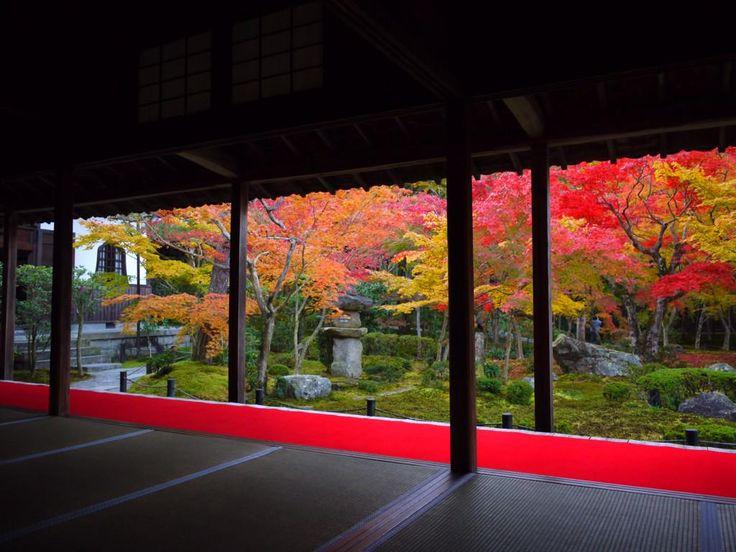 先日まで見頃を迎えていた京都の紅葉。多くの場所で落葉し、すっかり冬模様に。この秋、京阪沿線を美しく彩った紅葉をまとめてみました。過ぎゆく秋を惜しみながら、ご覧いただければと思います http://togetter.com/li/755239