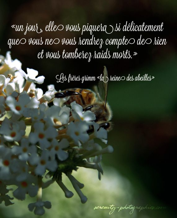 La petite abeille butine, butine... Jamais elle ne prend de repos. Nikon D3100 objectif SIGMA 18-200  #photo #nature #macro