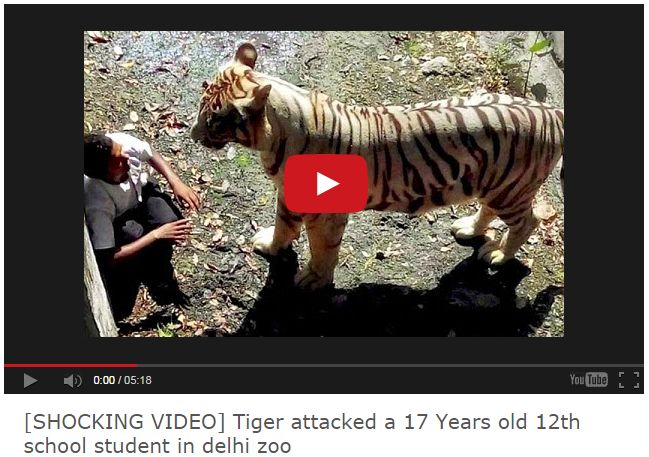 [SHOCKING VIDEO] Tiger attacked a 17 Years old 12th school student in delhi zoo - Movies & Videos Gallery