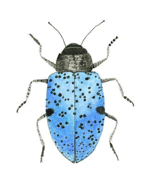 Pretty Blue Beetle Beetle Illustration By Lindsaybrackeen On Etsy