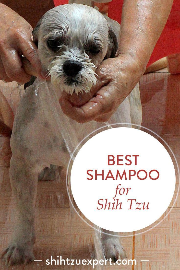 Best Shampoo For Shih Tzu 2019 Buyer S Guide Best Dog Shampoo