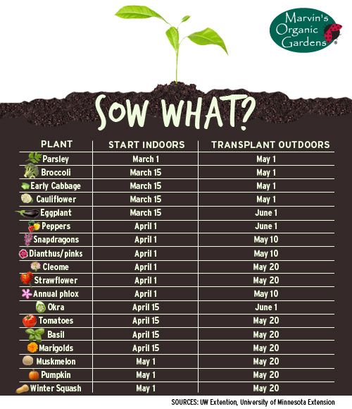 Chart of when to start growing veggie & fruit plants indoors and transplant them outdoors