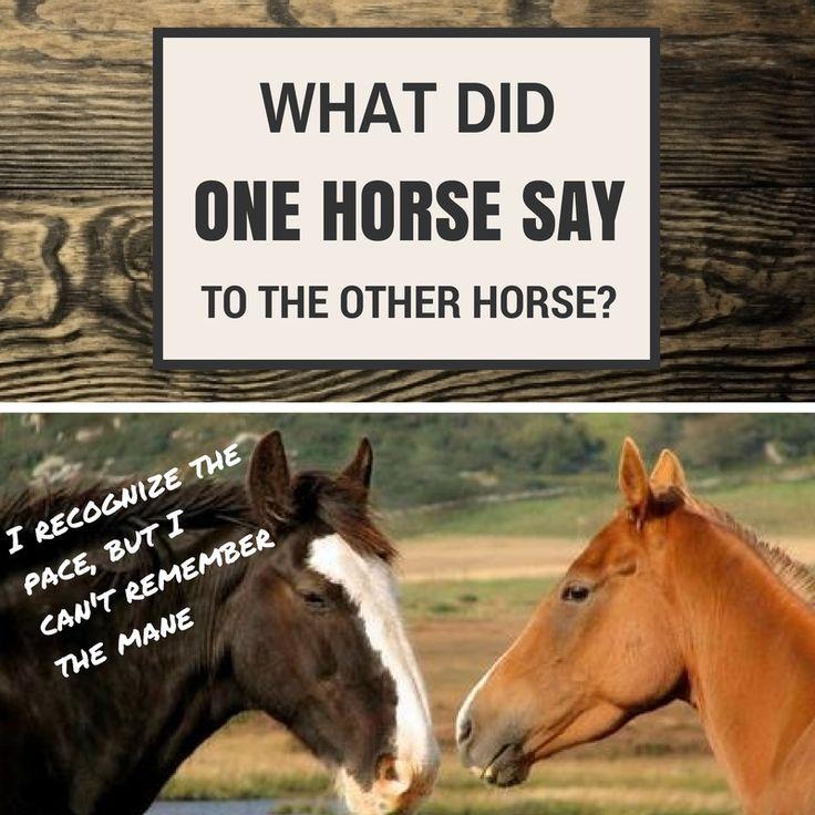Horse cartoon jokes - photo#8