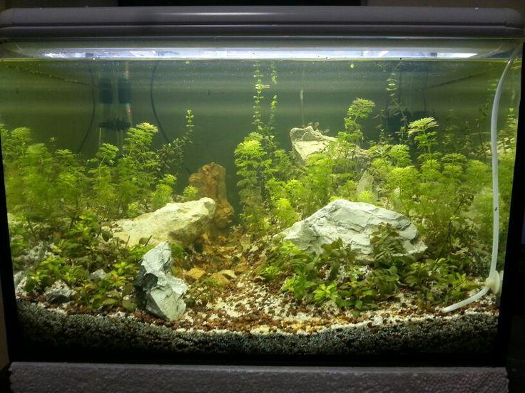 Aquarium design my akvaryum sesiflora karides bacopa for Aquarium log decoration