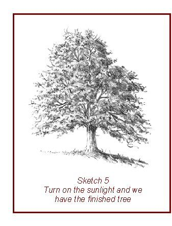 Learning how to draw trees need not be difficult. Just follow the few simple steps described and you'll be drawing believable trees of all kinds that you never thought possible!