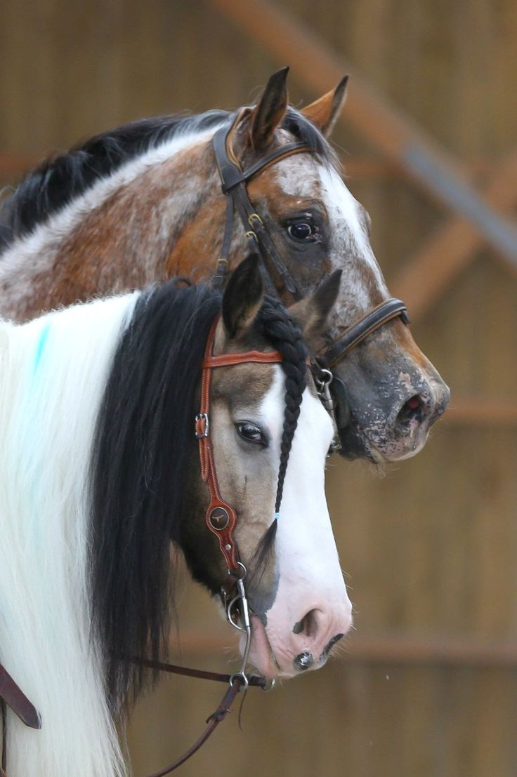 horses                                                                                                                                                                                 More