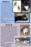 Posted March 1, 2015 Kathy and Whiskers attend Saving Southern Kitties adoption events each weekend at the Rivergate Petsmart in the Steele Creek area of Charlotte. Both are so laid back and spoiled that they curl up and sleep through the event, and are overlooked by potential adopters.  It would be nice to see them find their forever family. Together, if at all possible, since they're BFF's.